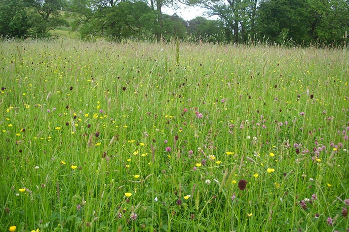 Upland meadow at Bell Sykes Farm, Slaidburn, Forest of Bowland